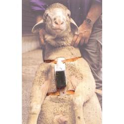 Arnés de cuero (para carnero)